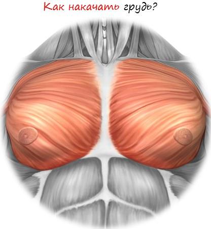 Как накачать грудь часть 1