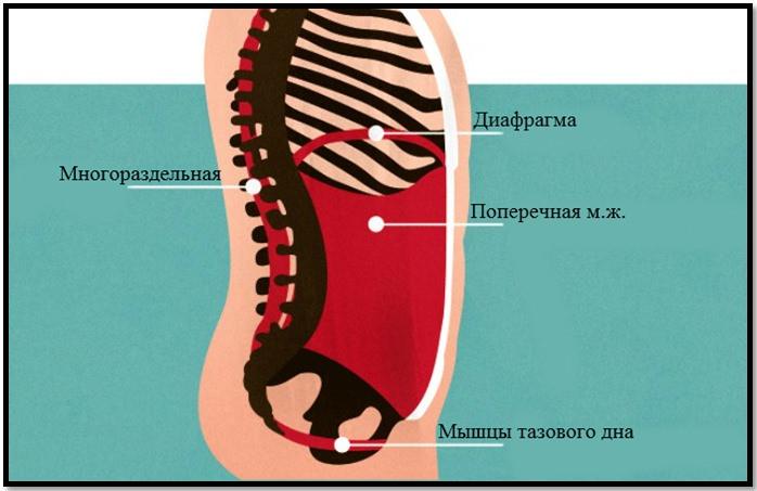 Мышцы пресса глубокий слой