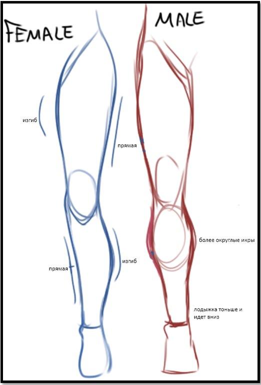 Особенности строения мужских и женских ног