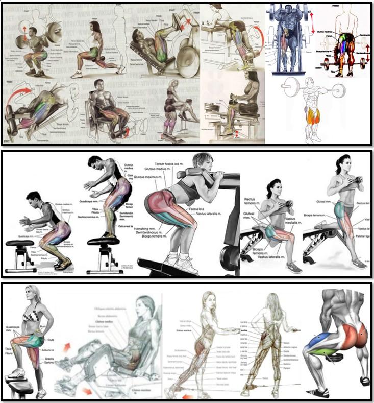 Как накачать ноги, атлас упражнений
