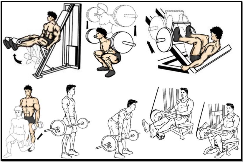 Программа тренировок ног №4 упражнения