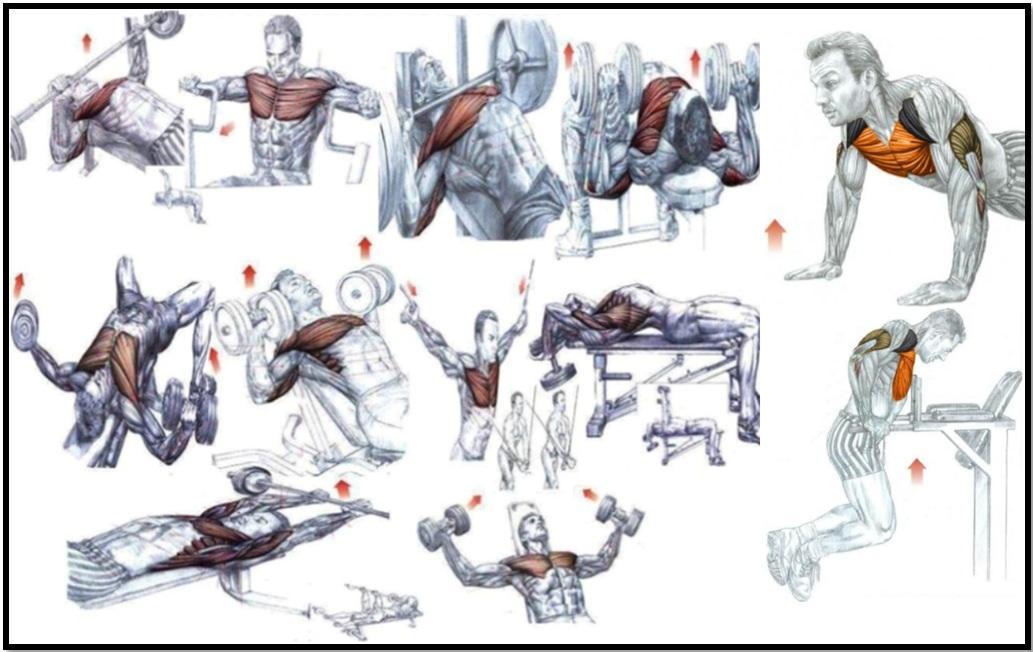 Как накачать грудь атлас упражнений