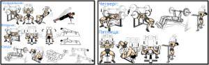Программа тренировок груди №2 атлас упражнений