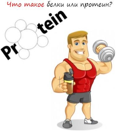Что такое белки