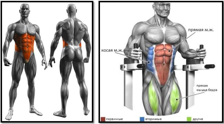 Подъем коленей в висе мышцы