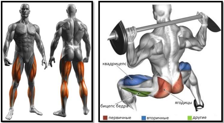 Приседания со штангой с широкой постановкой ног мышцы