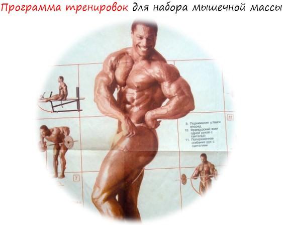 Программа тренировок для набора мышечной массы