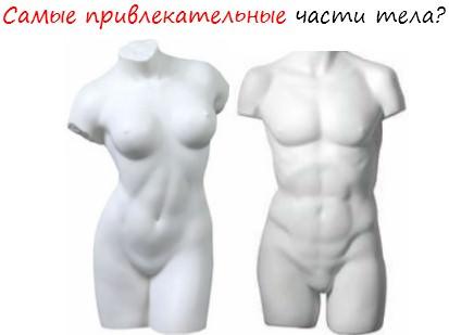 Самые привлекательные части тела