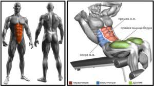 Скручивания на римском стуле мышцы