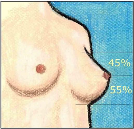 идеальная форма груди
