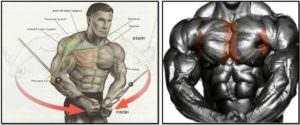 упражнение кроссовер, мышцы в работе