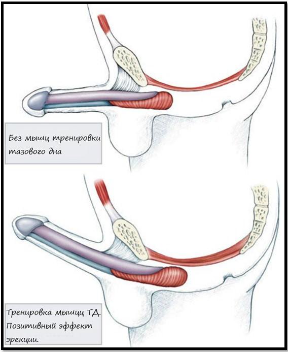 Оргазм от тренировки вагинальных мышц