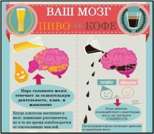 влияние кофе и пива на мозг