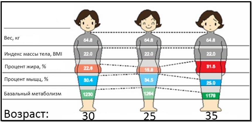 одинаковый вес, разная композиция тела