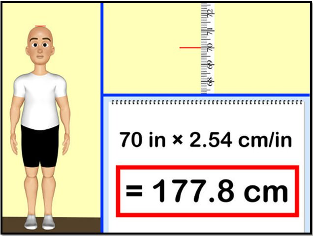 Как определить скорость метаболизма