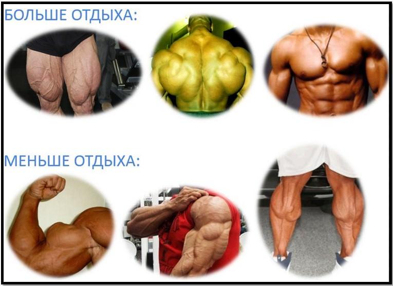 Программа тренировок на каждый день