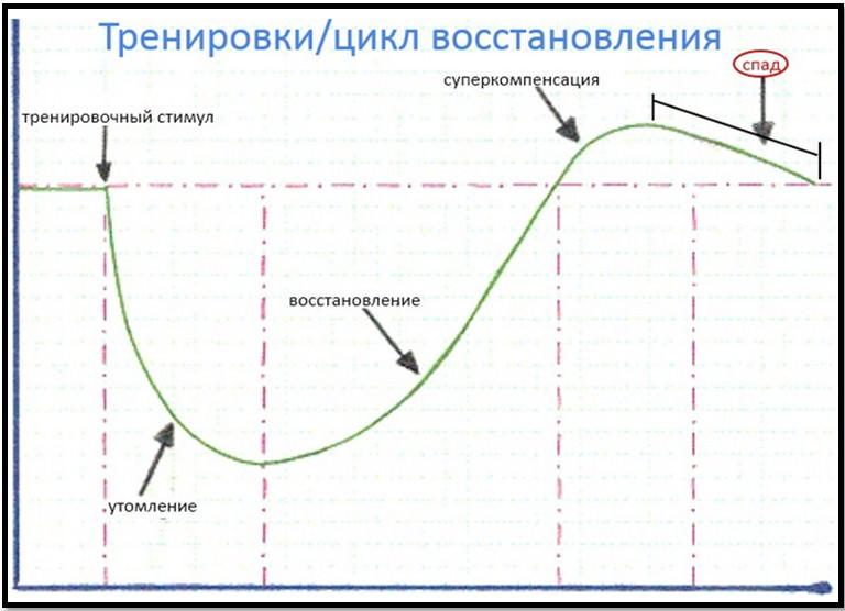 явление суперкомпенсации