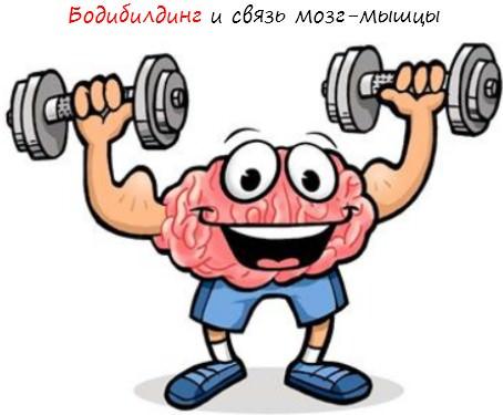 Связь мозг мышцы
