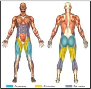 гакк приседания, мышцы