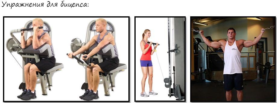 упражнения для девушек на бицепс