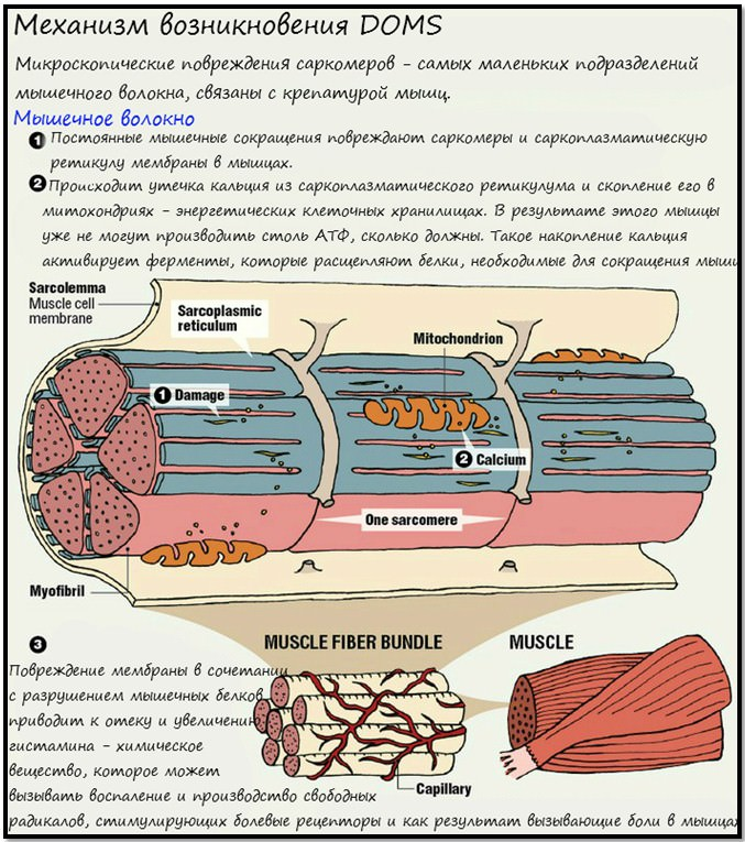 механизм возникновения крепатуры мышц