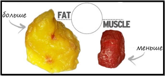 соотношение жир мышцы