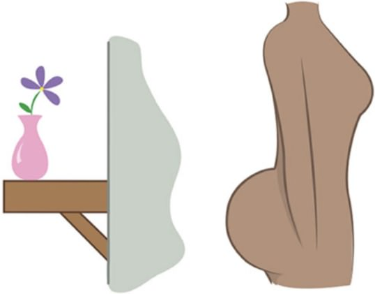форма женских ягодиц, полочка