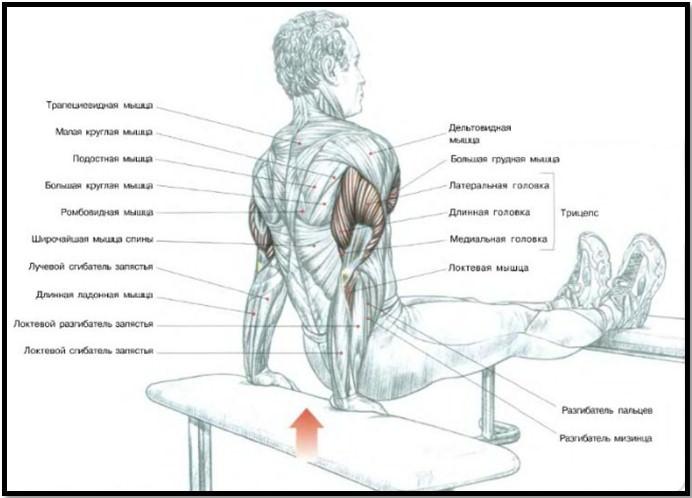 Упражнения для мускулатуры в домашних условиях