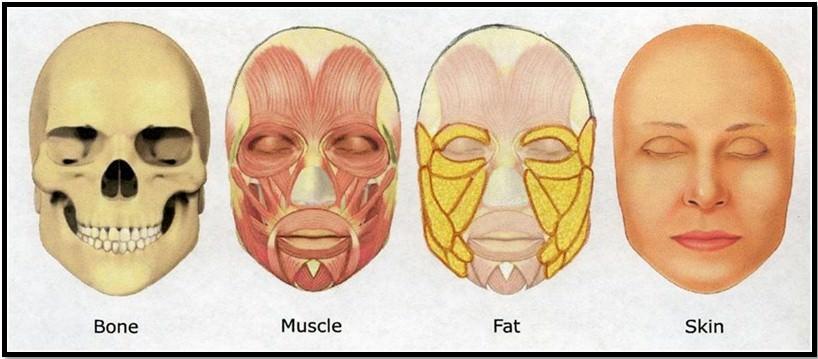 Как похудеть в лице, чтобы появились скулы и впали щеки.