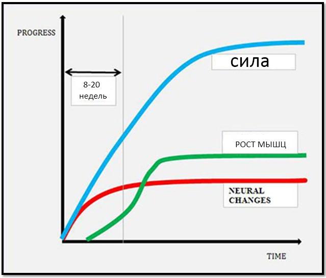 смена программы тренировок, график исследования