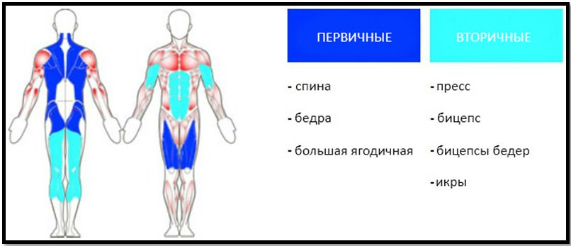 становая тяга с гантелями мышцы в работе