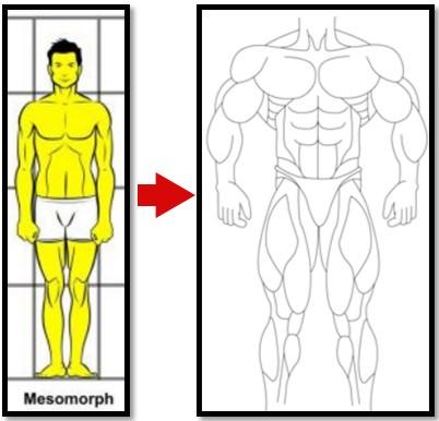 мезоморф набрал мышцы