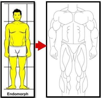 Эндоморф набрал мышцы