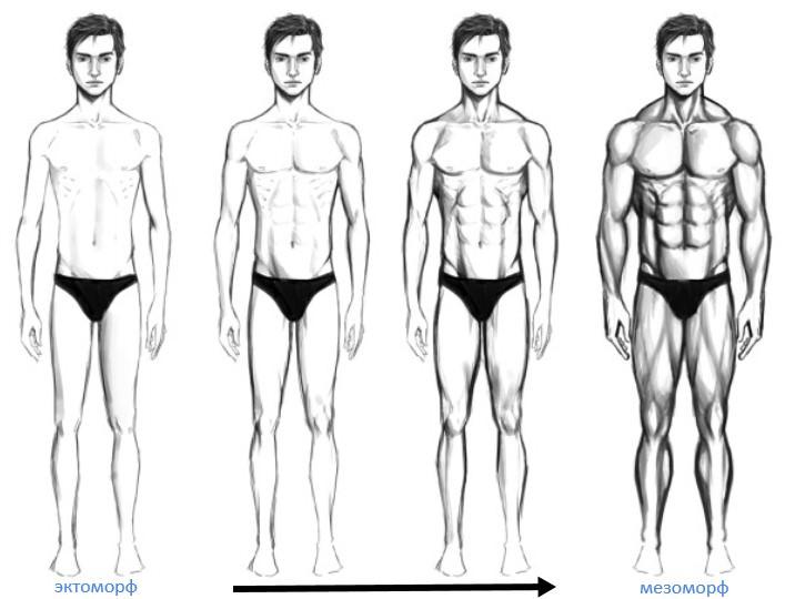 смешанный тип телосложения