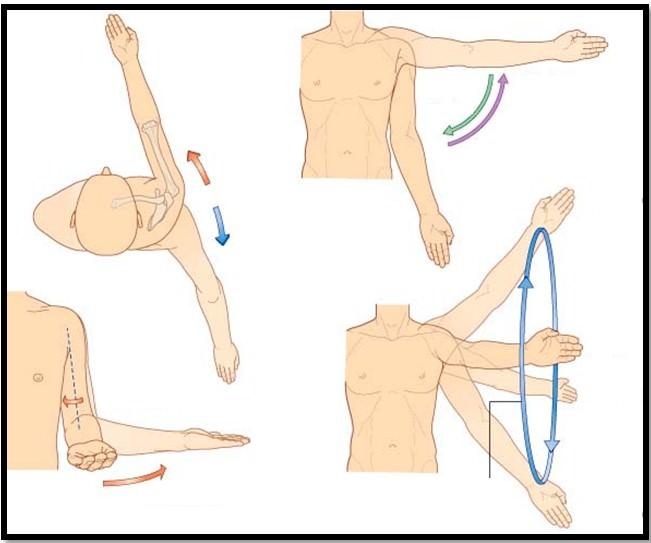 плечевой сустав, движения