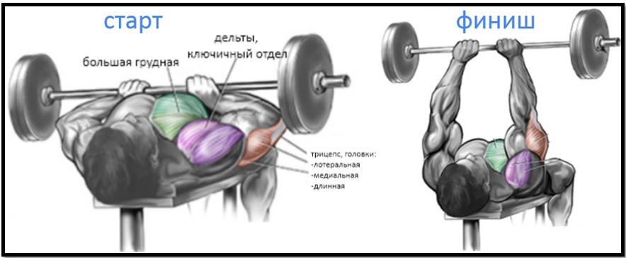 Жим лежа узким хватом. мышцы