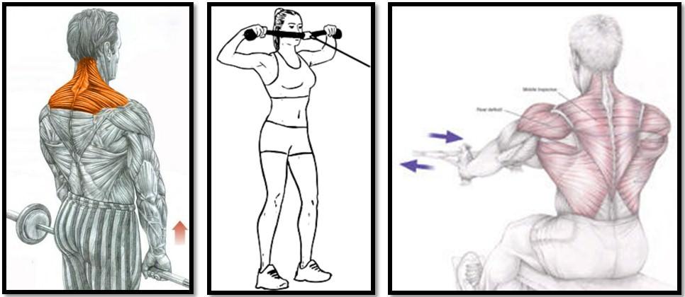 Лучшие упражнения на трапеции