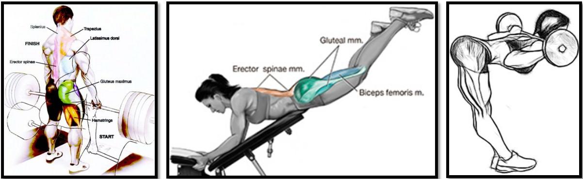 Лучшие упражнения на разгибатели спины