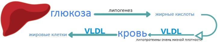 процесс передачи жиров в жировые клетки, часть 1