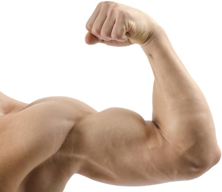 руки мышцы