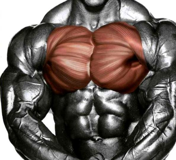 Тренинг грудныхv
