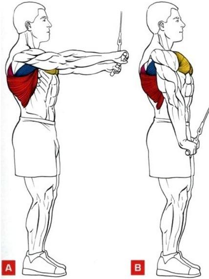 Мышечный атлас упражнения тяга книзу прямыми руками