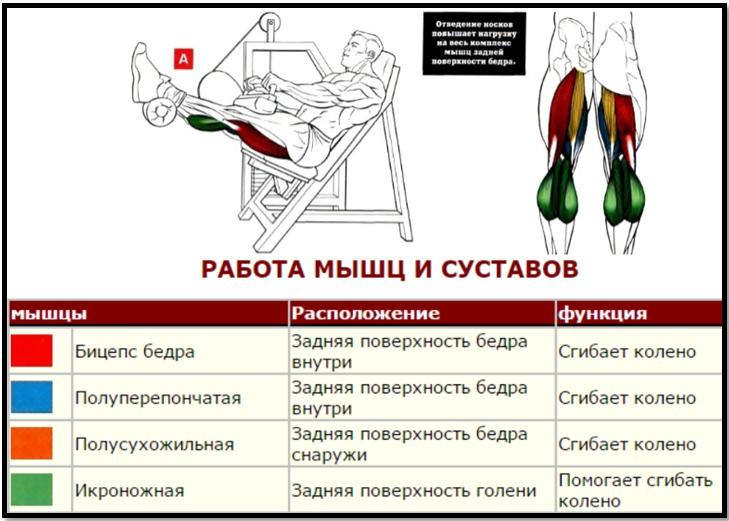Сгибание ног сидя мышцы в работем