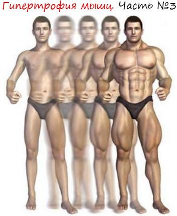 Гипертрофия мышц. Часть №3