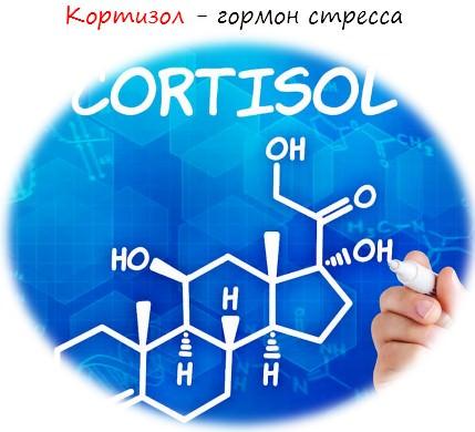 Кортизол - гормон стресса