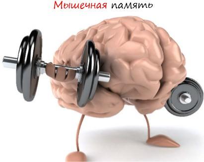 Мышечная память. Что это такое?
