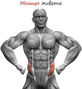 Myishtsyi-zhivota-279x300 Мышцы живота