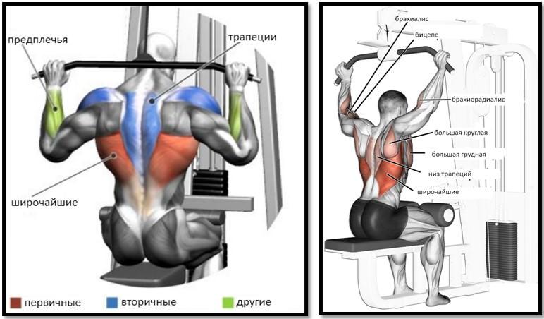 Тяга за голову верхнего блока мышцы