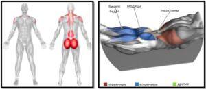 Упражнение супермен мышцы