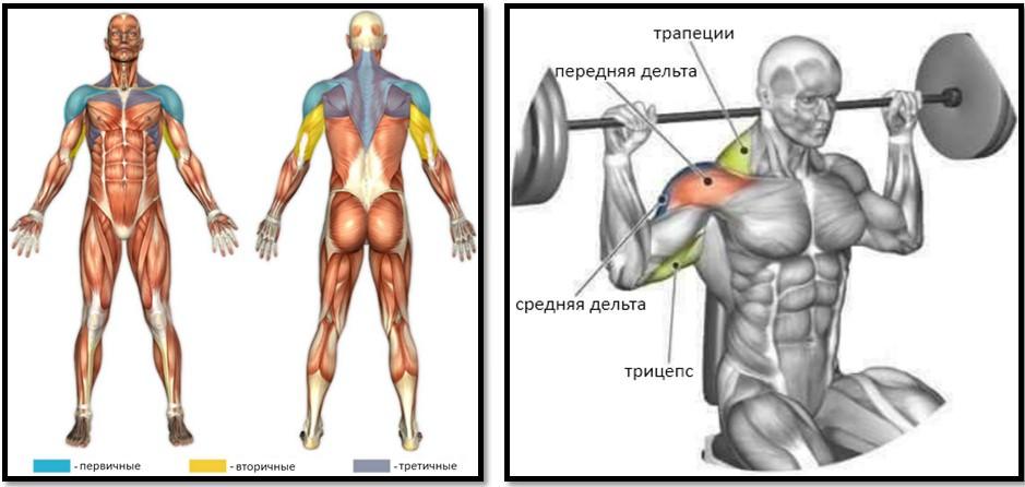 Жим из за головы в Смита мышцы